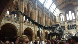 Diplodocus/Sludge (okay, Sludge is actually an Apatosaurus, but this was the closest one)
