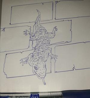 Wall lizard #sketchdaily 37/365