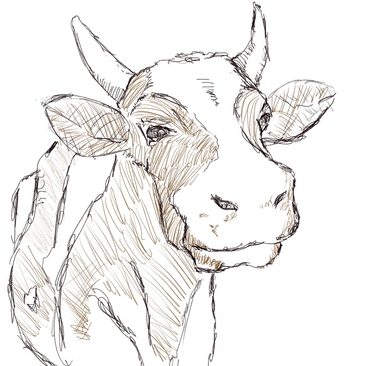 Cow. #sketchdaily 61/365